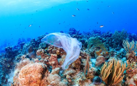 We should be more careful with the plastic in our oceans