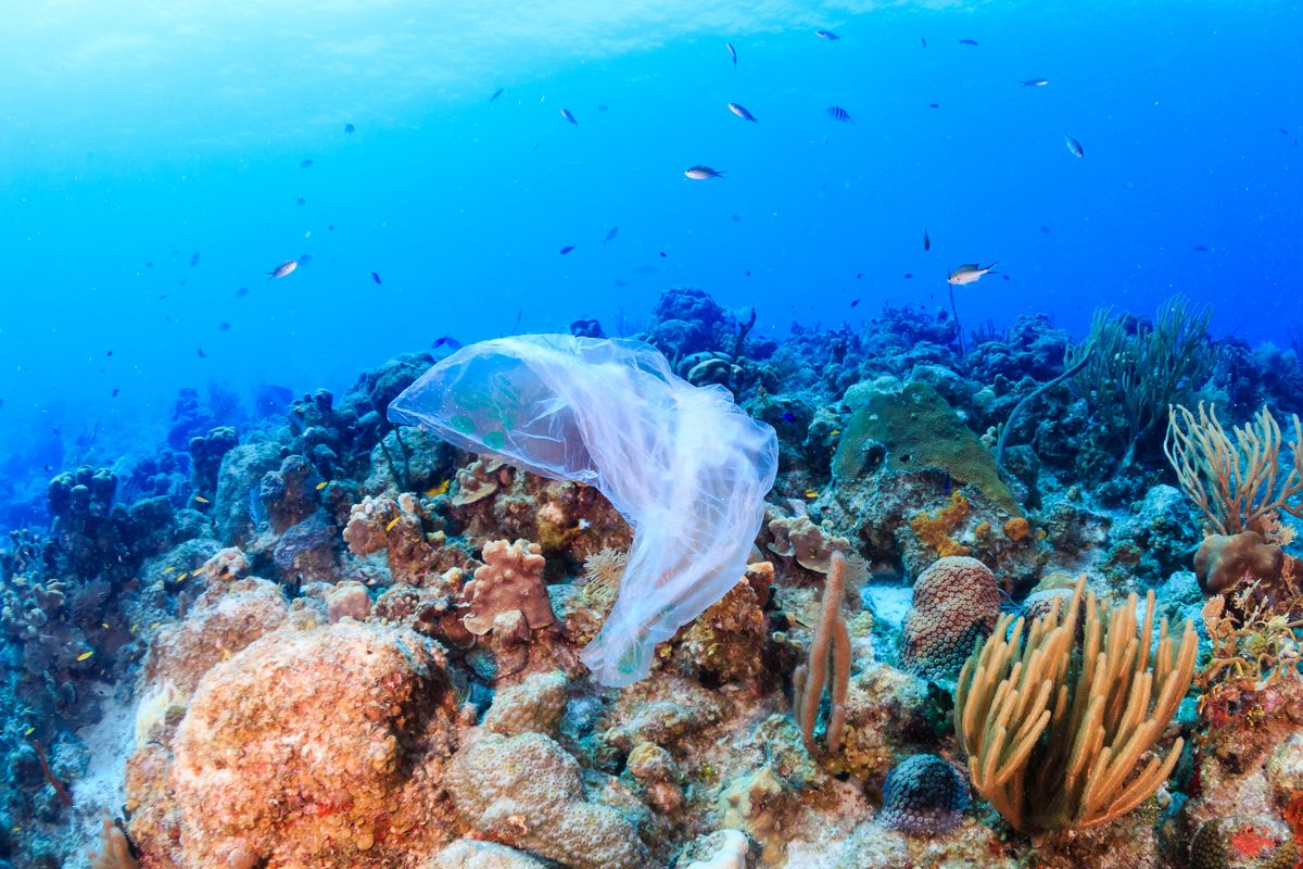 In the eyes of a hungry sea animal, this plastic bag may very well look like a delicious jellyfish. But in eating it, the animal may choke and die.