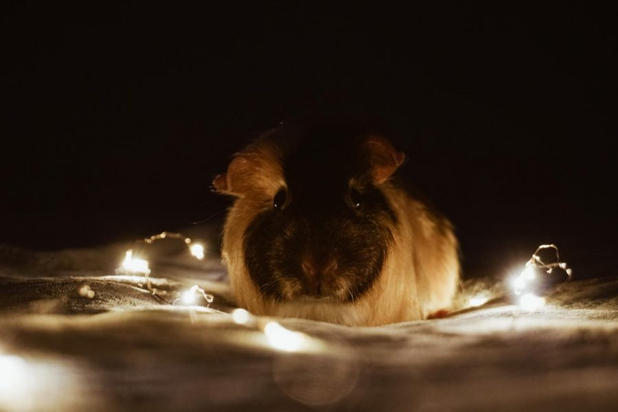 Quarantine Pet Photo Challenge