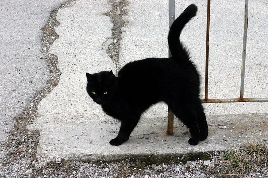 A_Black_Cat