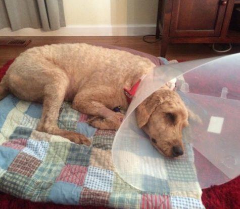 Midnight Dog Surgery