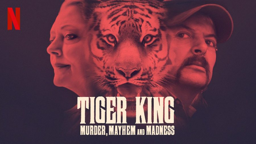 Tiger King: Murder, Mayhem, and Madness review
