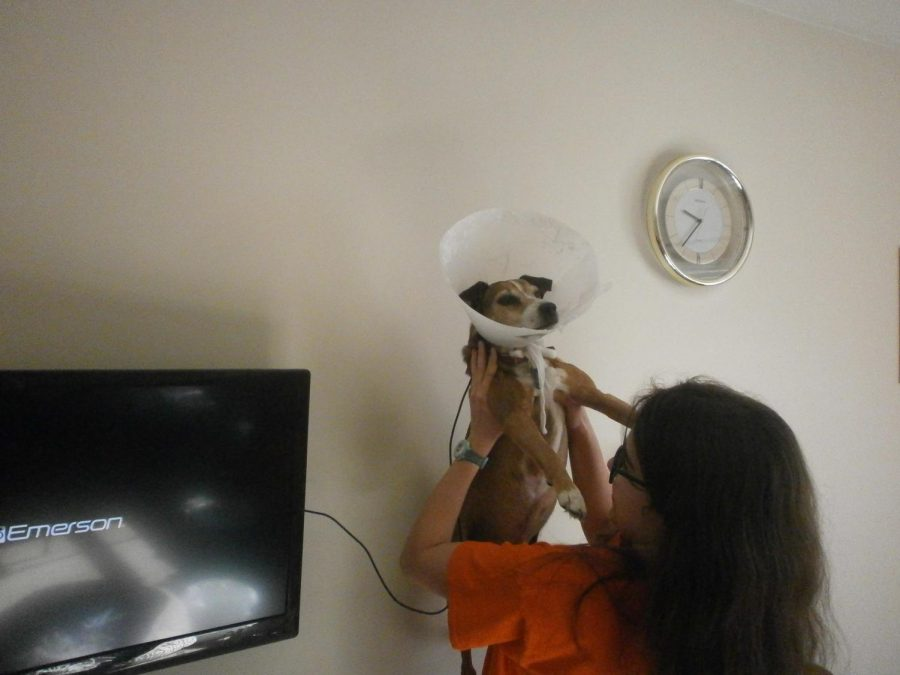Quarantine pet photo challenge winners announced