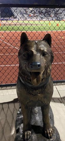 The Balto statue greets visitors at Huskie Stadium.